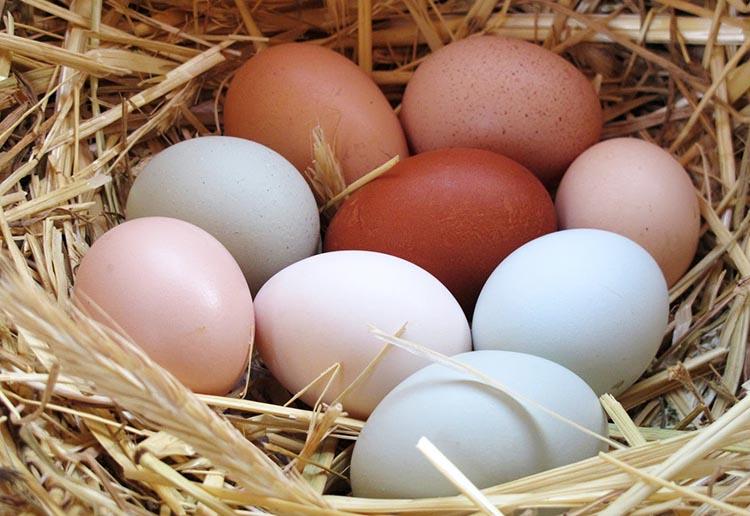 Guía del Huevo